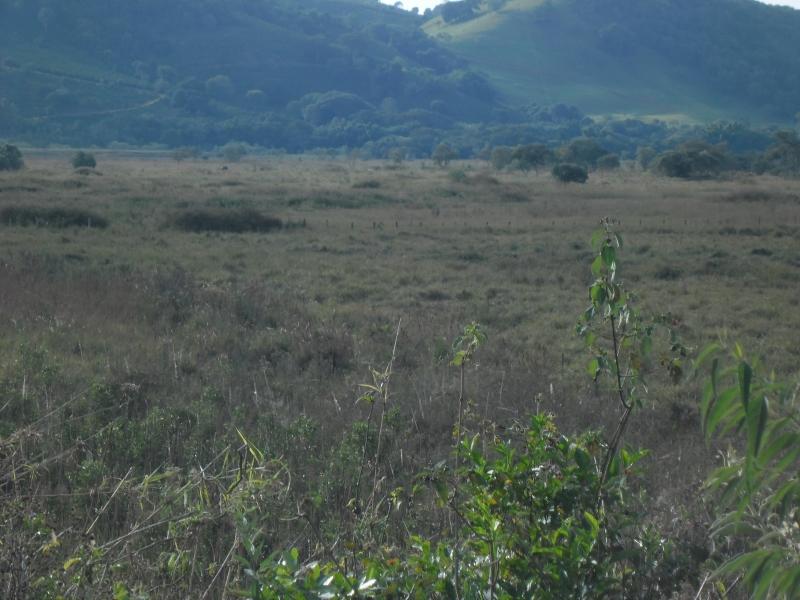 Sandra Reis Imóveis - Casa, Faz. 5 Km de Lambari - Foto 18